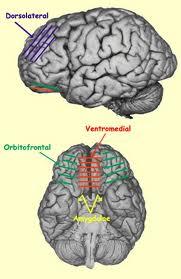 ventromedial